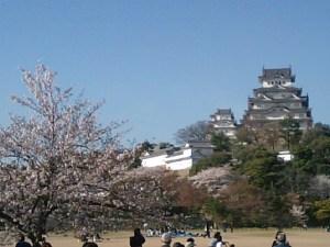 桜満開 姫路城